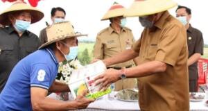 Gubernur Olly Dondokambey SE menyerahkan bantuan Bibit Tanaman pada Petani Tomohon, Senin (27/07/2020)