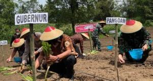 Gubernur Olly Dondokambey SE saat menanam tanaman pangan, Kamis (09/07/2020)