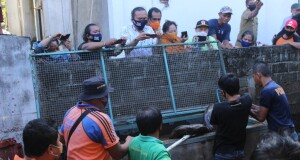 Evakuasi satwa luar Ular Piton dari tempat penangkaran milik warga ke Pusat Penyelamatan Satwa di Tasikoki Bitung, Senin (14/09/2020)
