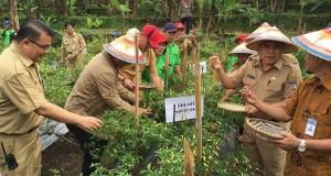 Bupati Sajow panen cabe di kebun Kembes bersama BI dan stakeholder